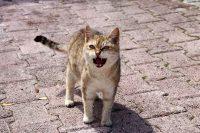 Heb je een kat, dan moet je niet mauwen……